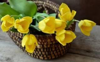 Свадебный букет из тюльпанов (фото)