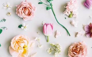 Тренды свадебной фотографии 2017